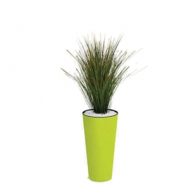 Plantes vertes Onion Grass